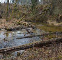 Zielona Łaka-wśród powalonych drzew