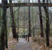 Gołabek-ścieżka na terenie rezerwatu przyrody Bagna nad Stażka