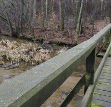 Gołabek-na ścieżce torfowiska i zbiorowiska bagienne