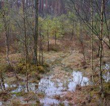 Gołabek-teren bagienny