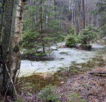 Gołabek-jeszcze skute lodem