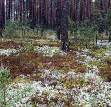 Biała-a lasy piękne i o tej porze roku