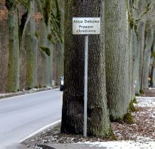 Grabowa Buchta-aleja