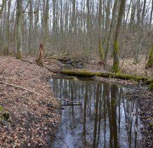 Wierzchlas-rezerwat