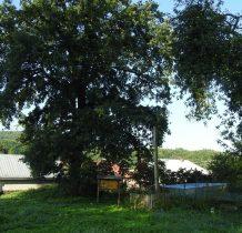 Rybotycze-tylko drzewa zostały