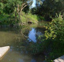 Rybotycze-druga strona gęsto zarośnięta