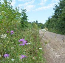 Kopysno-ok.4km marszu wśród kwiatów i dziko rosnacych drzew owocowych