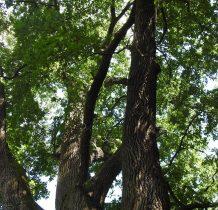Sierakośce-otoczona starym parkiem