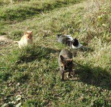 kociaki w Krywem