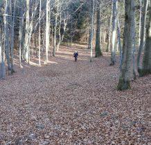 wśród pięknych bukowych lasów