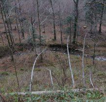 w dolinie potok