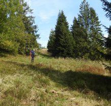 przedzierajac się przez las wychodzimy wreszcie na polany Magurki