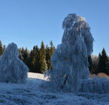lodowe drzewka