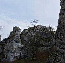 drzewka wrosłe w skały