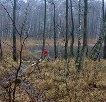 Dziwnów-uroczym lasem