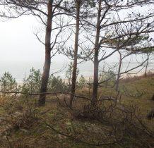 Dziwów-lasem w kierunku falochronu