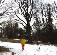 Grodziec-park zamkowy z bogatym starodrzewiem