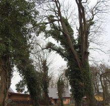 Dobropole-nad cmentarzem pochylaja się drzewa
