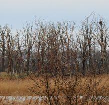 Połchowo-Gardzka Kępa objęta jest strefa ochronna