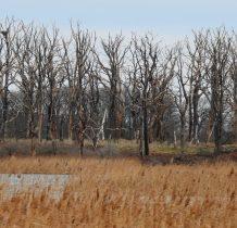 Połchowo-Gardzka Kępa-była miejscem lęgów orła bielika