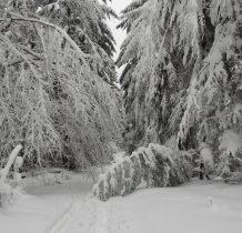 wśród drzew