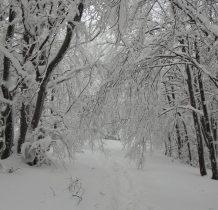 pod cięzarem śniegu