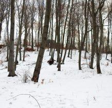 obok parkingu wchodzimy w las i idziemy żółtym szlakiem