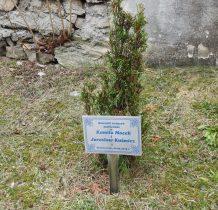 przy murze kościelnym nowe drzewka ufundowane chyba przez nowożeńców