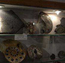 skamieniała ryba,łupki i amanity
