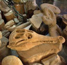 skamieniałe szczatki zwierzat