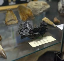 meteoryt z Syberii