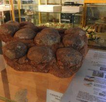 skamieniałe gniazda jaj dinozaurów