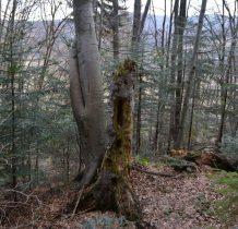 idziemy dalej przez las-zagajniki-Wisłok szumi gdzieś na dole