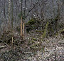 wokół zagarnięte przez przyrodę ruiny