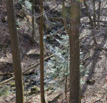 potoki wija się w lesie