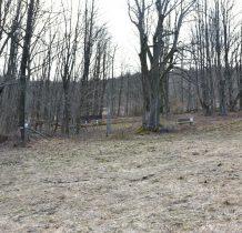 obok lipy w lesie ukryte resztki kamienne domów