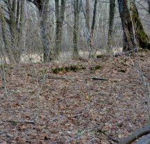po całym lesie fragmenty dawnych zabudowań