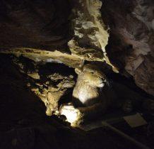 w namuliskach jaskini odkryto 20000 szczatków zwierzat