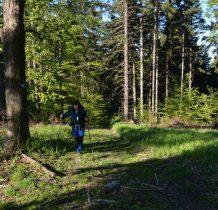 w słoneczku lasem