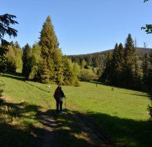 wyraźna droga dochodzimy do polan-po lewej Mała Borówkowa