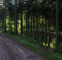 do granicy czerwony szlak prowadzi leśna droga