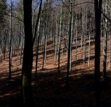 58.na stromym zboczu