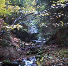 w głębi lasu wodospad