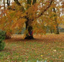 w objeciach jesieni