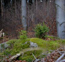 zielone wysepki