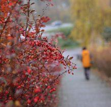 jesienia żegnamy Uniszki Zawadzkie