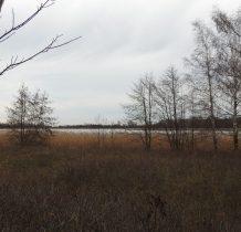 Jezioro Mikoszewskie