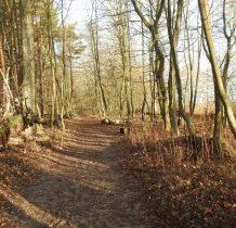 kawałek leśna ścieżka
