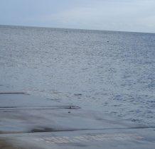 w oddali dostrzegamy głowę foki-mieszkaja tutaj