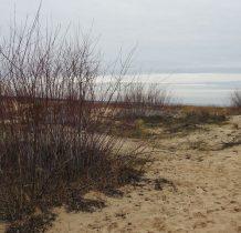 wśród przybielonych krzaczków opuszczamy nadmorskie piaski